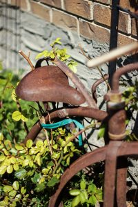 Rusted trike in my parent's front yard